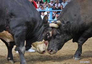 bull01-1024x717