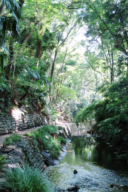 東京 森林浴 スポット