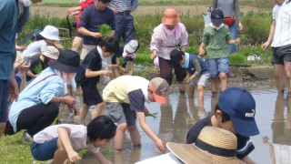 田植え 体験 東京