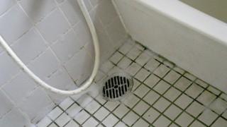 風呂 カビ 掃除